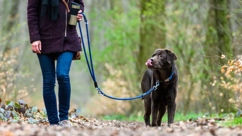 Frau spaziert mit Hund an Gebüsch vor – sie ahnt nicht, wer dort wartet