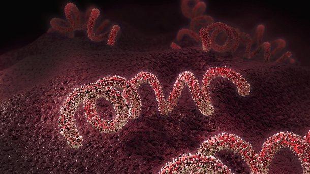Zahl der Syphilis-Infektionen in Europa steigt auf Rekordwert